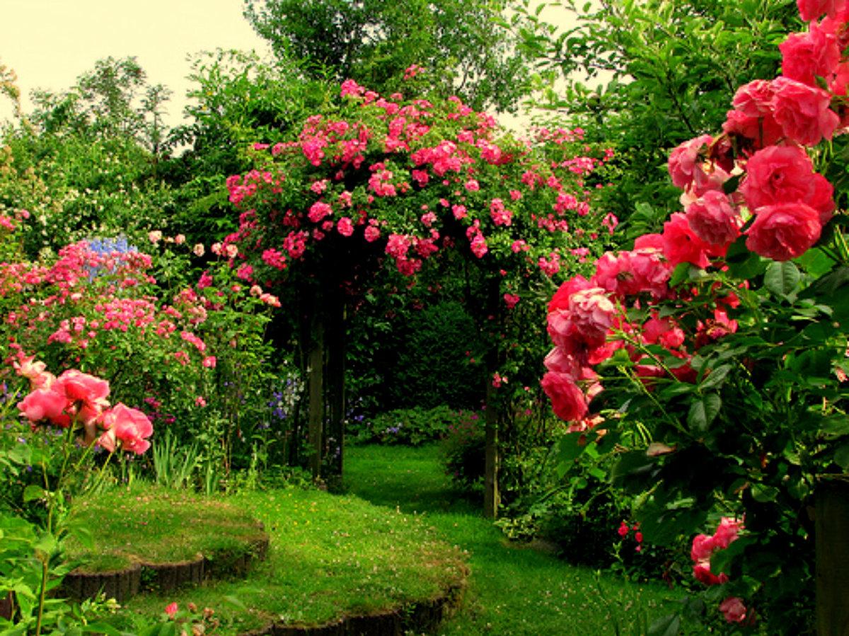Фото роз и цветов в саду