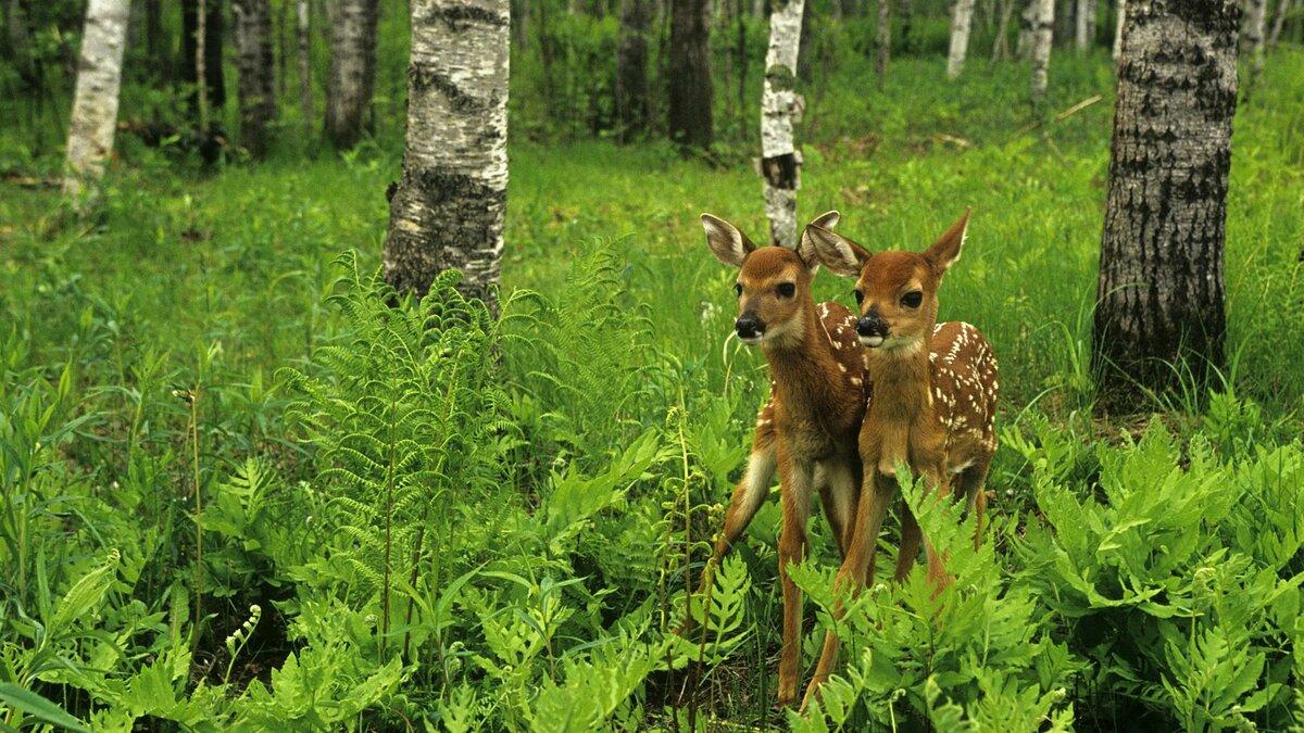 Животные леса для детей фото