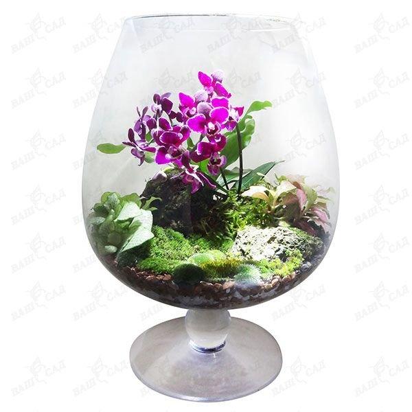 Флорариум с орхидеей уход