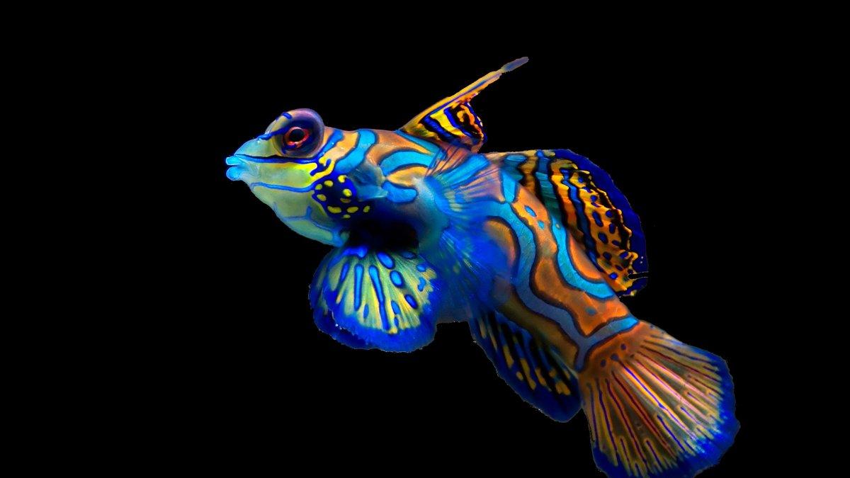 Juegos de tomar fotos a peces gratis 67