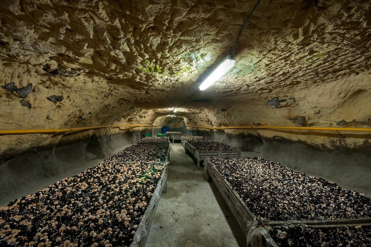 Для выращивание грибов шампиньонов 91