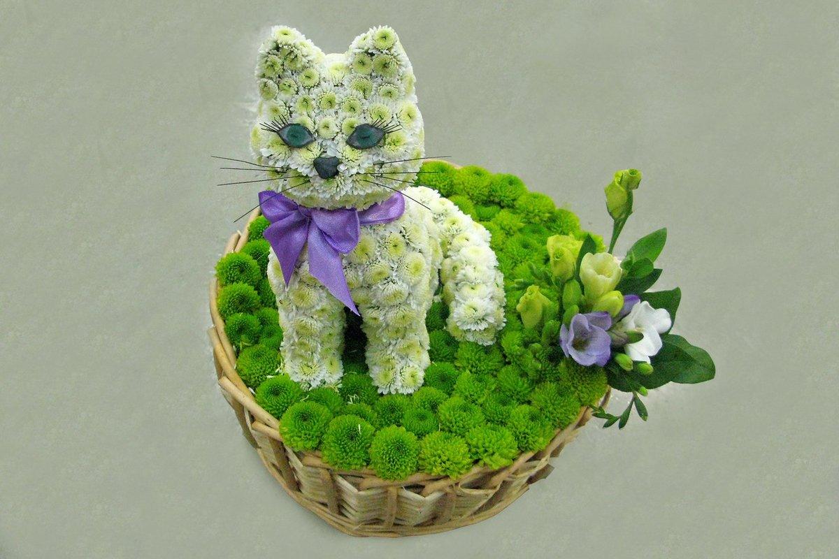 Кот из живых цветов своими руками 7