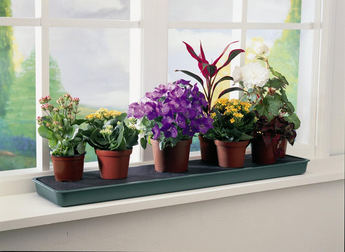 Какие домашние цветы нельзя держать в доме фото