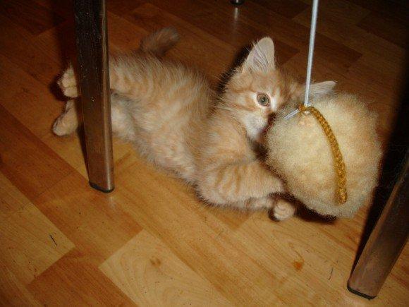Как на бумаге сделать игрушку для кошки 541