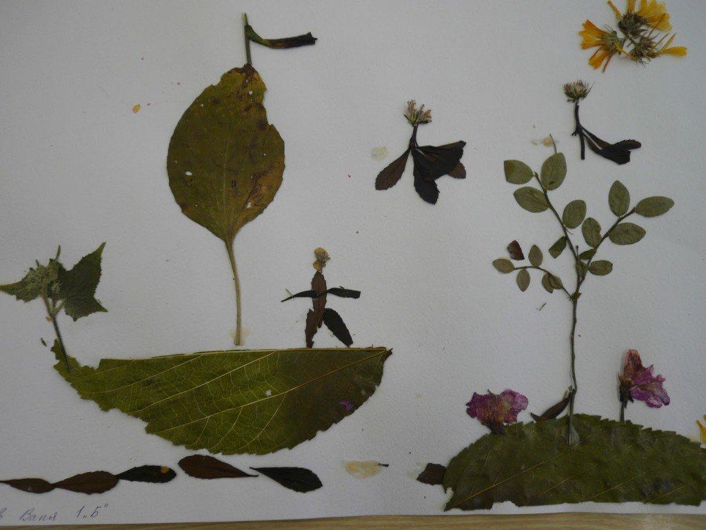 Поделки из листьев оригинальные 25
