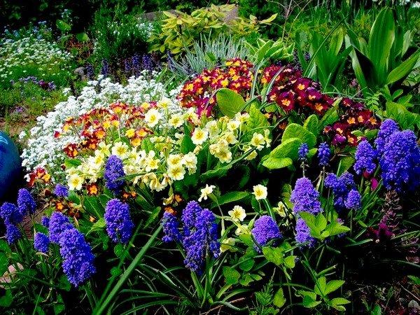 Какие многолетние цветы цветут все лето фото