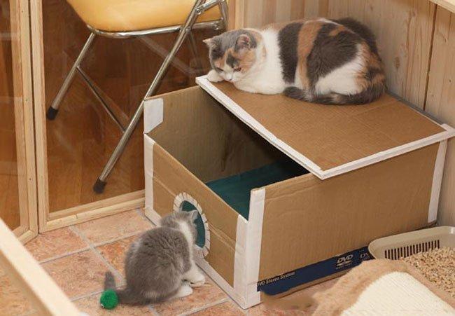 Как сделать домик для котёнка своими руками из коробки