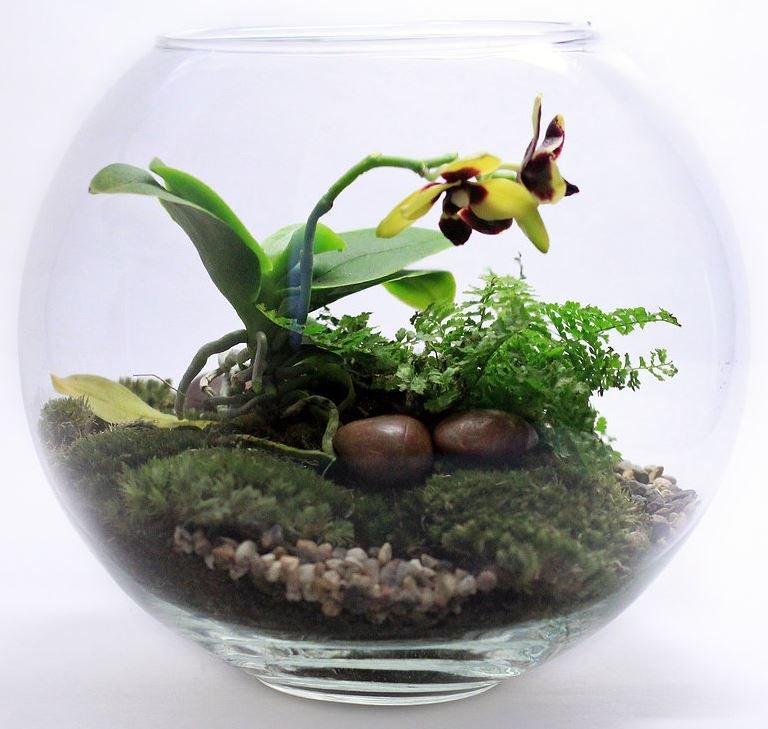 Как сделать флорариум для орхидей своими руками 80