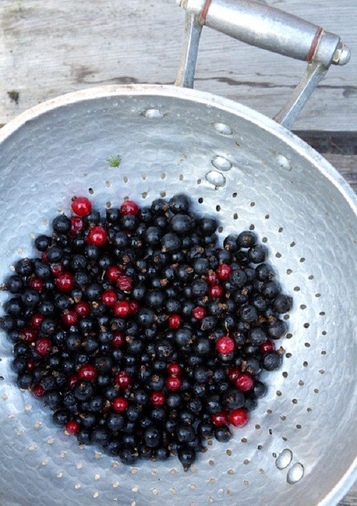Рецепт варенье пятиминутка смородина черная