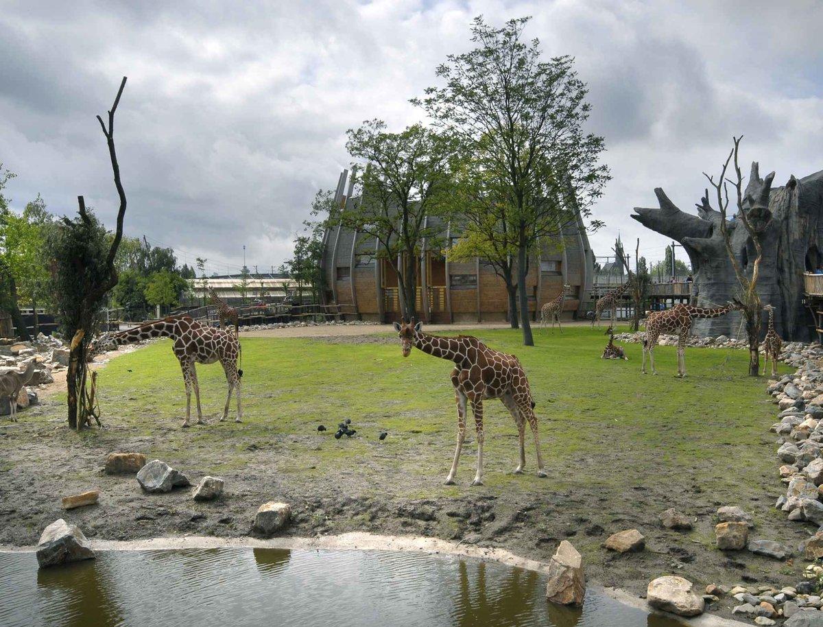 aanbieding dierentuin blijdorp