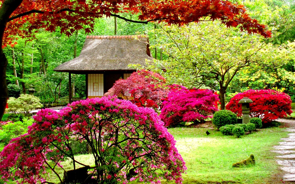 Фото сад с деревьями и цветами