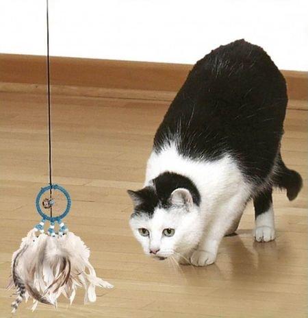 Игрушки для котят своими руками в домашних условиях легко и быстро 7