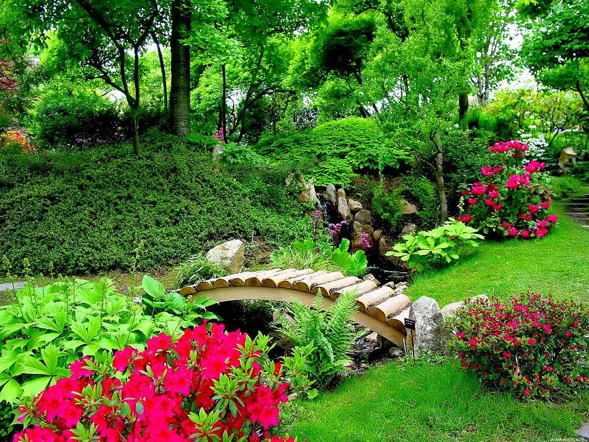 Цветы в саду и участках фото