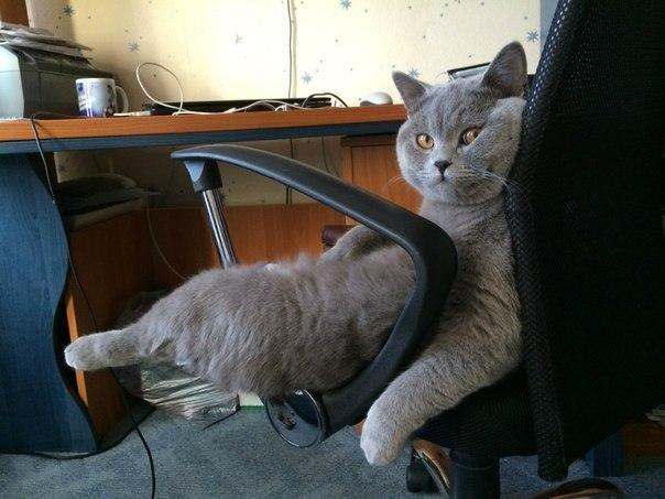 Кота первого в домашних условиях 635