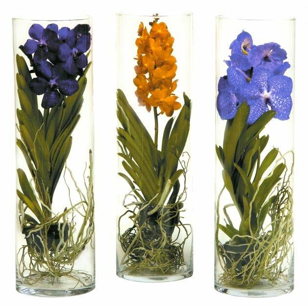 Цветок с воздушными корнями