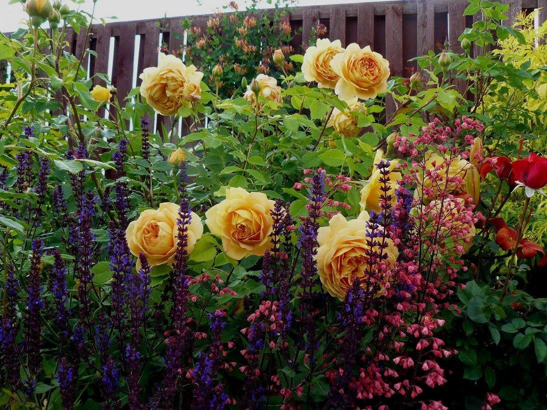 Что посадить рядом с розами? В цветнике (Огород. ru)