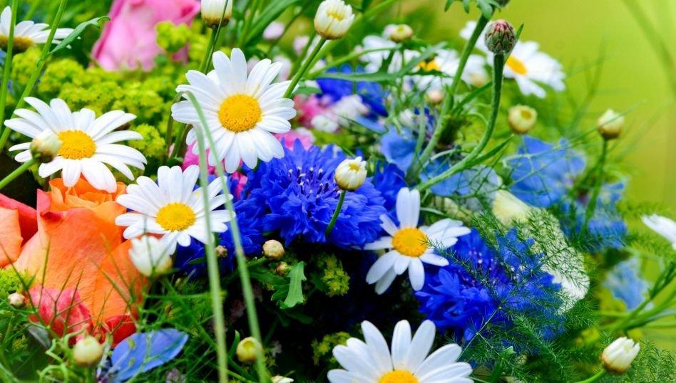 С днем полевых цветов