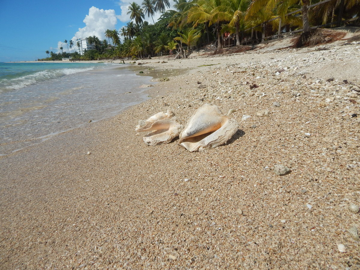 Что можно найти на пляже фото