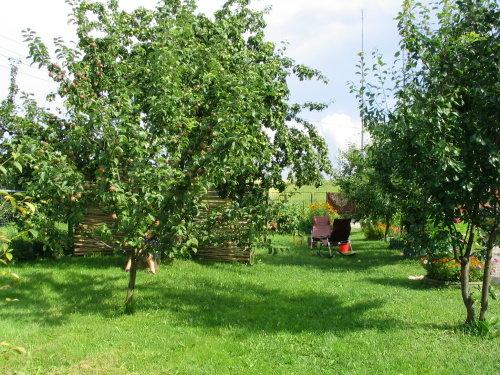 Яблони на даче своими руками фото