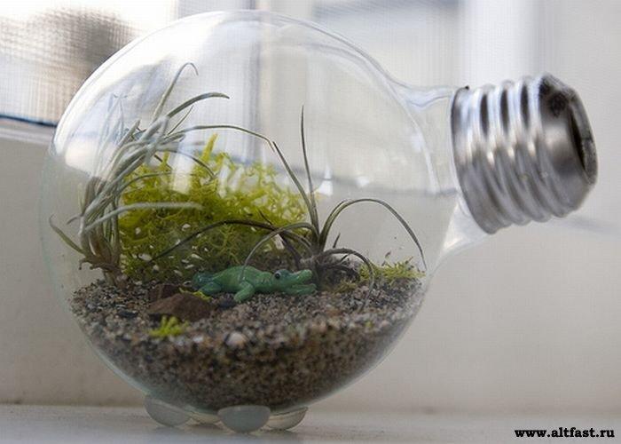 Террариум из лампочки своими руками фото