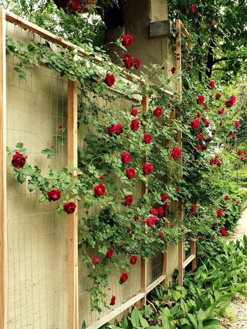 Арки для роз своими руками: формы 74