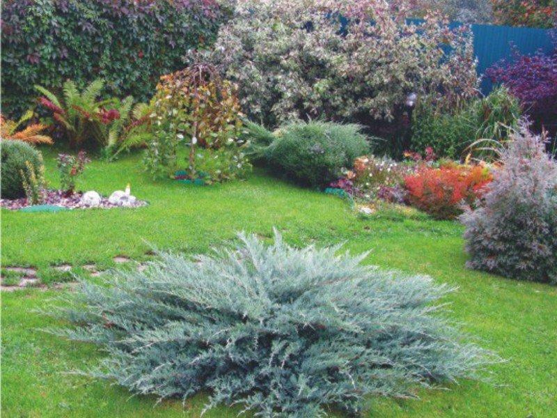 Горизонтальные можжевельники в дизайне сада