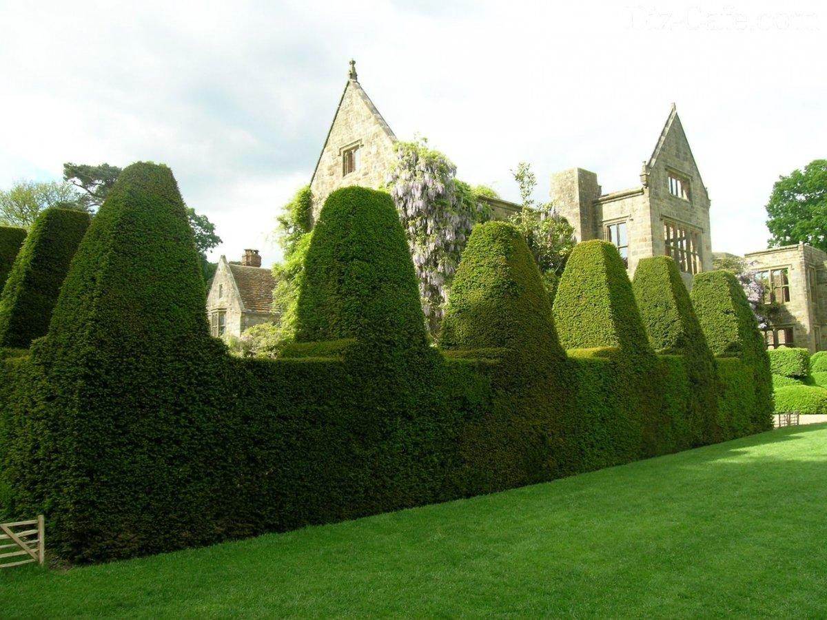 Зеленая изгородь на даче своими руками какие растения
