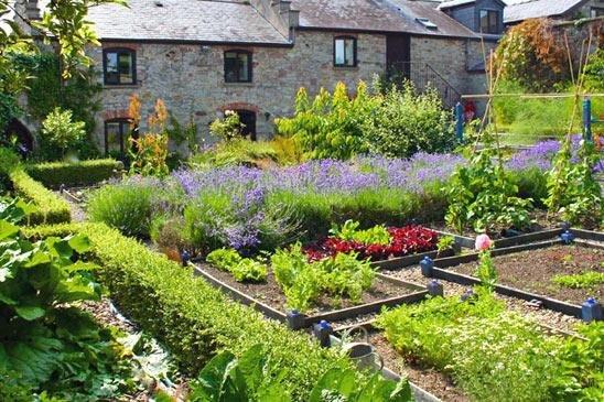 Ароматный сад своими руками