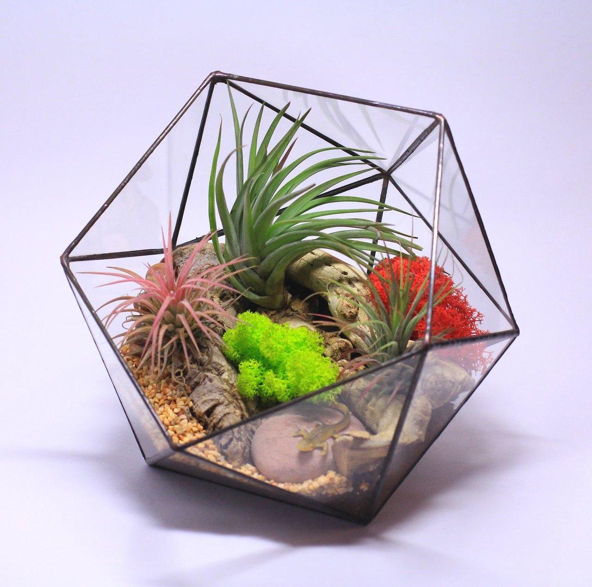 Геометрический флорариум своими руками пошаговая инструкция