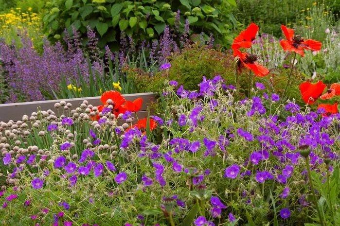 Цветы садовые неприхотливые