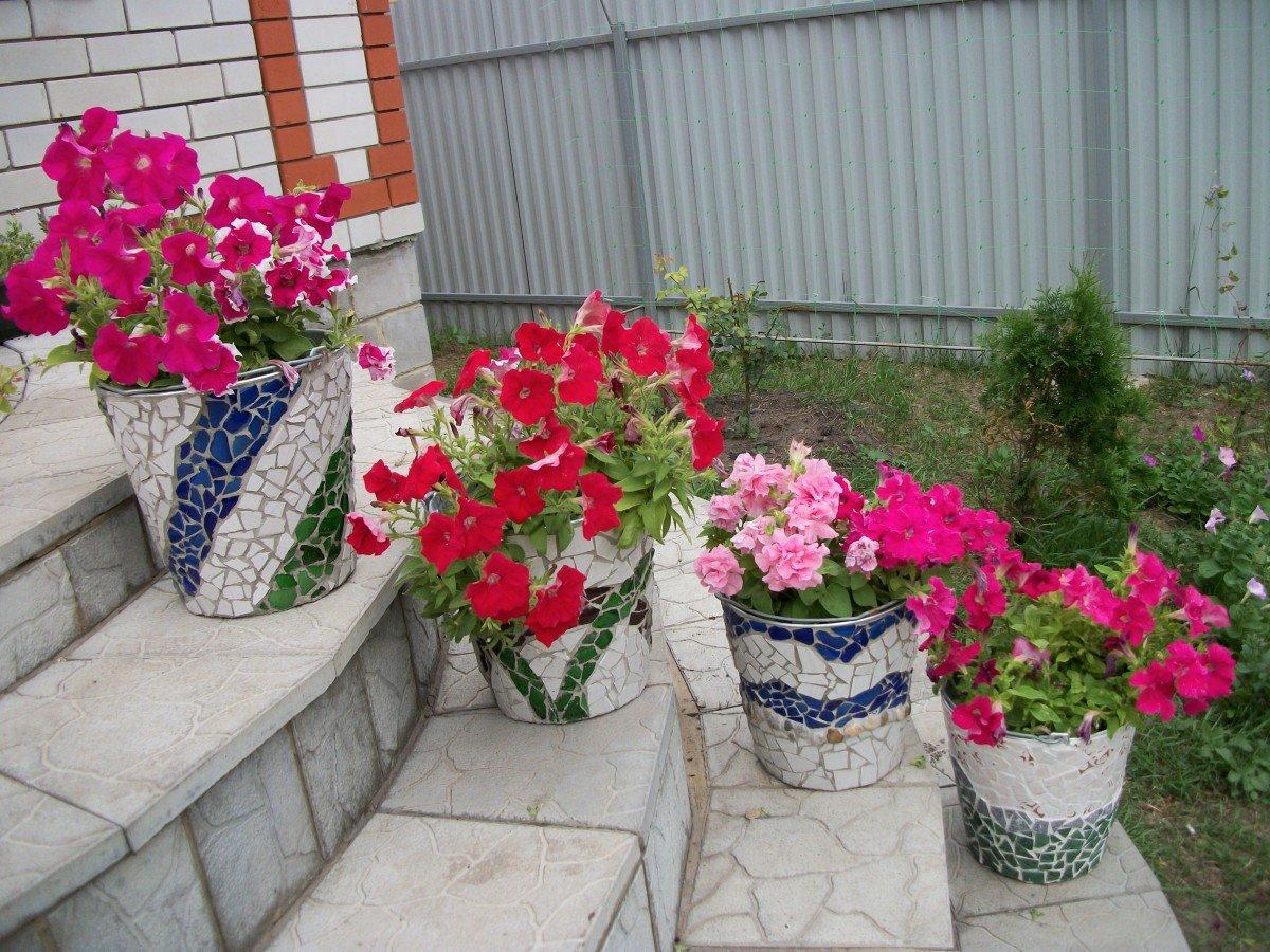 Какие комнатные цветы можно высаживать на улицу