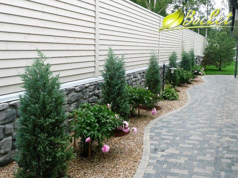 Где лучше сажать хвойники в саду 62