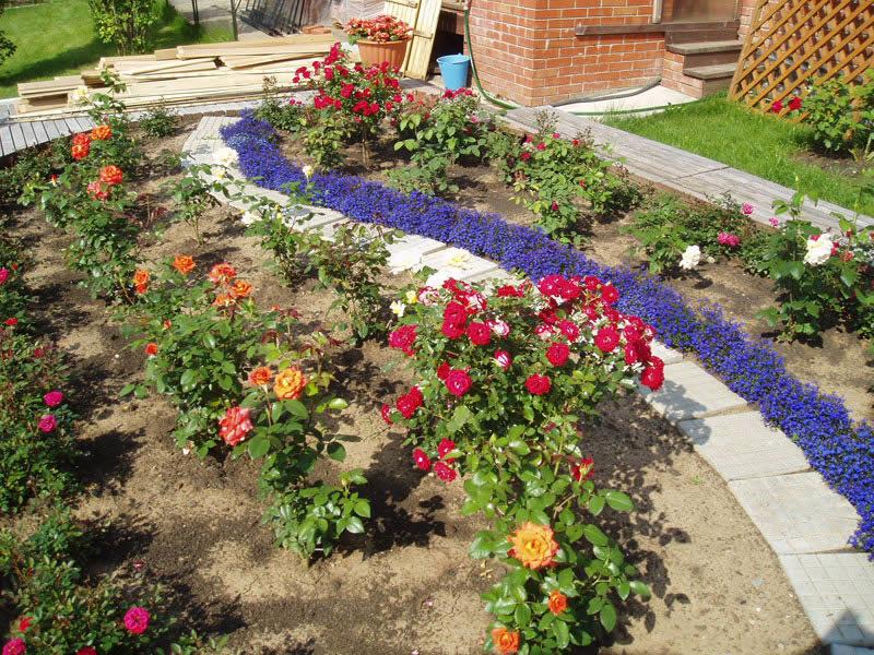 Дизайн клумбы с розами своими руками на даче фото 58