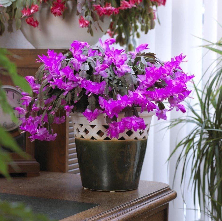 Самые красивые комнатные цветущие цветы