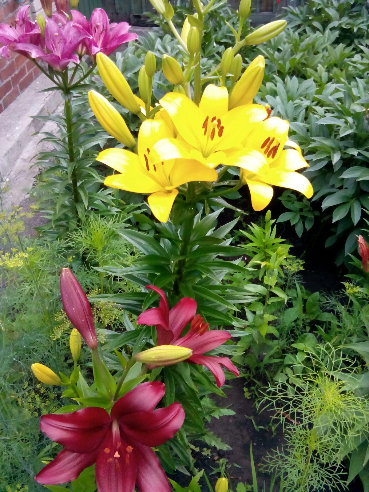 Цветы в дизайне балкона фото