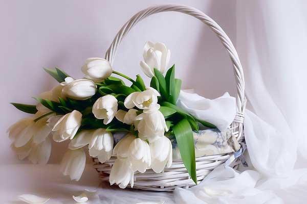 Белые цветы открытки