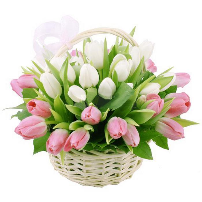 Тюльпаны красивая открытка 44