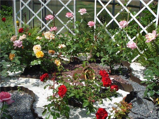 Как сделать клумбу с розами