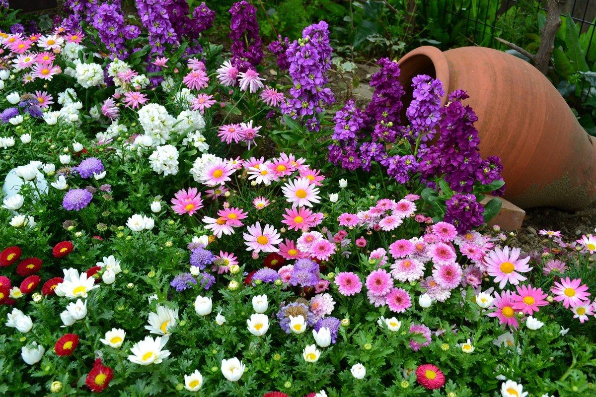 Неприхотливые цветы для сада многолетники фото
