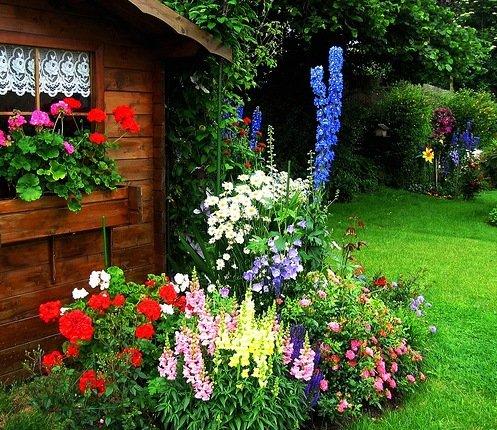 Цветы у дома в палисаднике