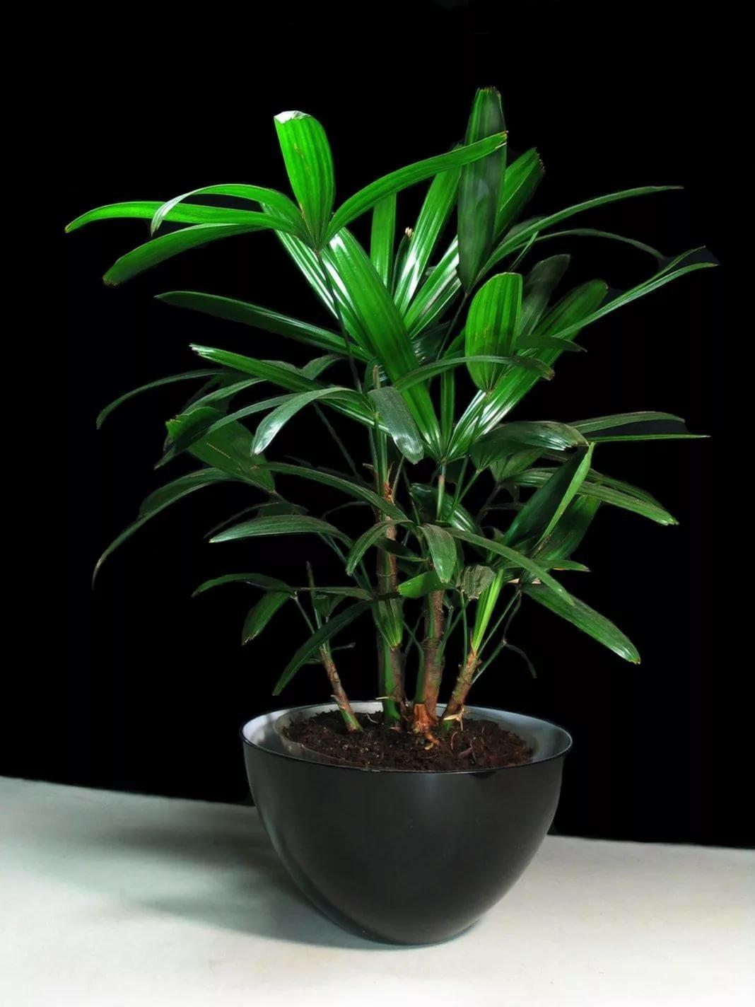Цветы как пальма