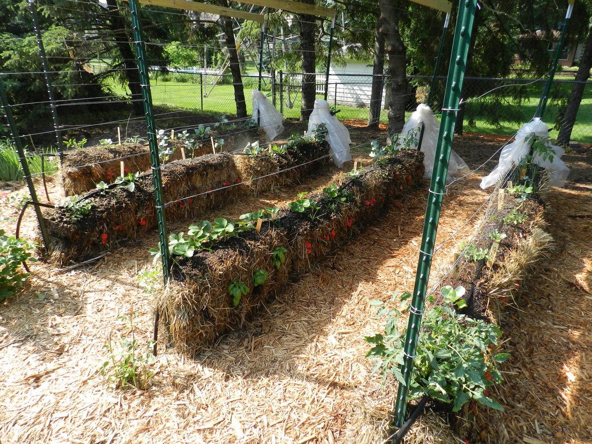 Сад и огород своими руками ютуб 7