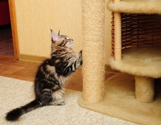 Содержание и уход за кошкой в домашних условиях 131