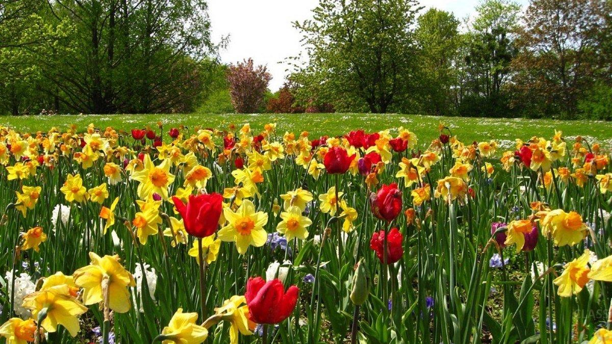 Фото обои с поляной цветов
