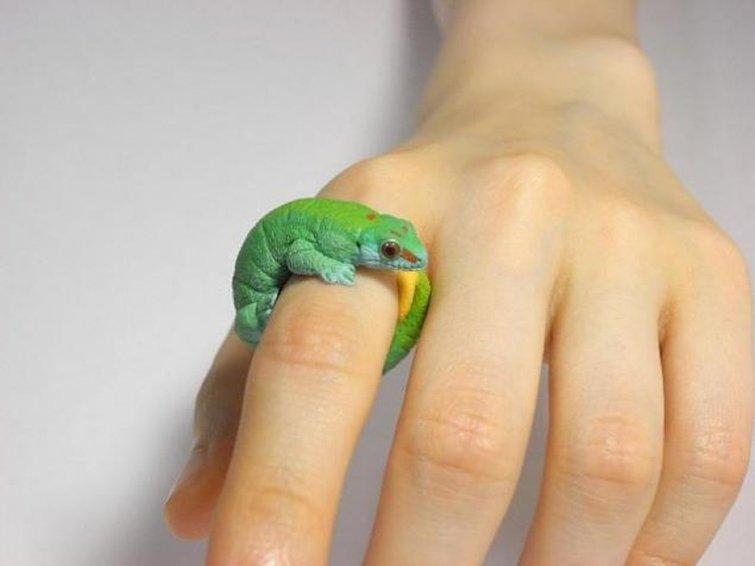 Ящерка из полимерной глины своими руками пошаговое фото 18