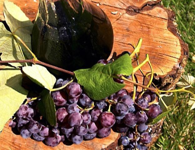 Рецепт вина с винограда лидия