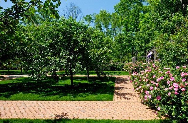 Дизайн садовых деревьев