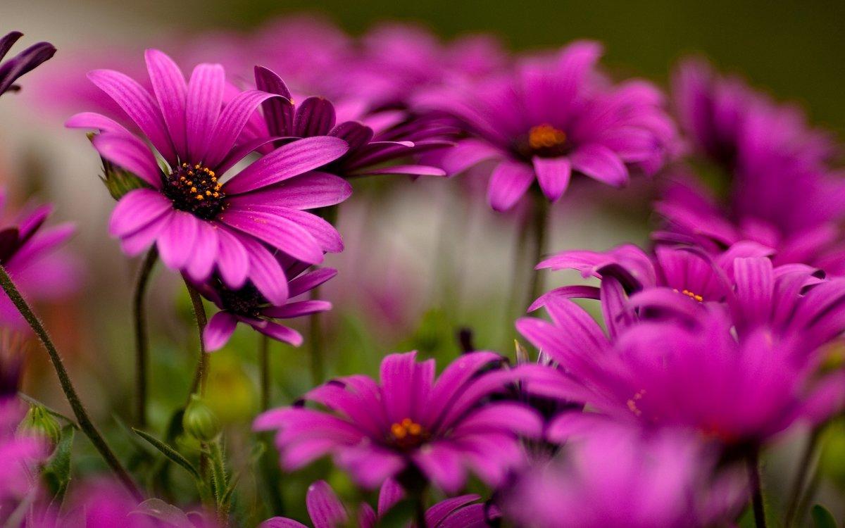 Цветы фото в яндексе
