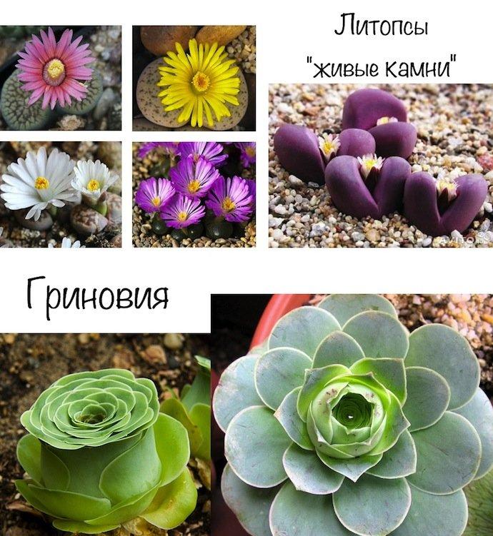 Самые неприхотливые цветы для дома