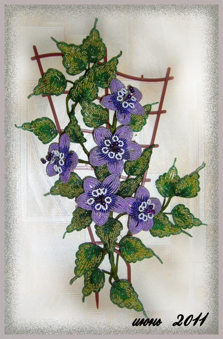 Цветок арабис фото и описание